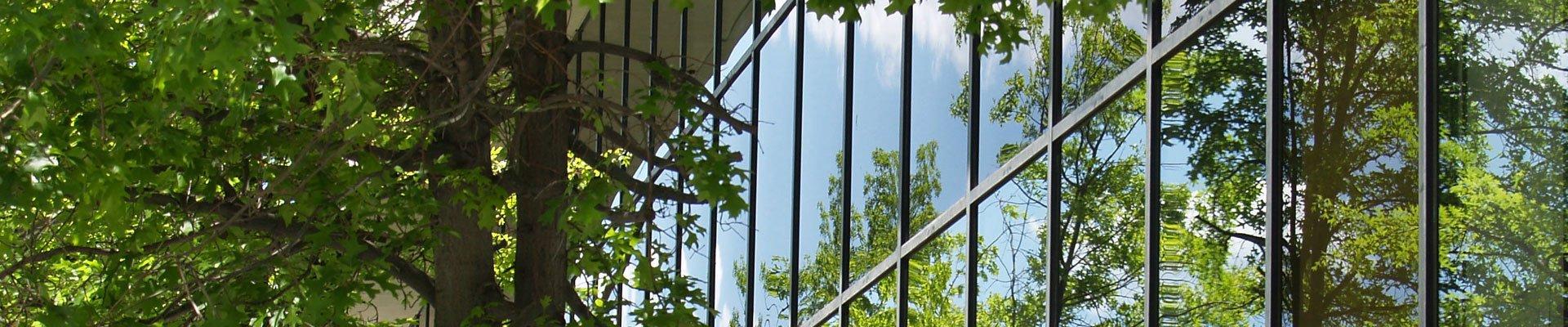 Baum spiegelt sich im Fenster